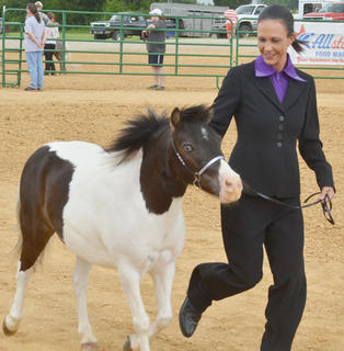 The Taylor County Fair offered several horse shows last weekend, including shows just for miniature horses and youth and then the annual Tommie Johns Memorial Championship Horse Show. Above, Sue Roution of Campbellsville trots with her horse, Marty, in the fair's miniature horse show.
