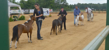 From left, Samantha Clark of Campbellsville, Conner Hayes of Columbia and Barry Porter and Matt Porter of Campbellsville compete in the fair's miniature horse show.