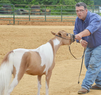 Barry Porter of Campbellsville participates in the fair's miniature horse show.