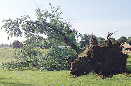 Abigail Osborne Dengel submitted this photo. The tree is more than 60 years old.