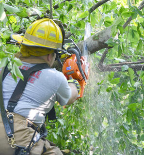 Campbellsville Fire & Rescue Captain Chris Taylor cuts a tree limb with a chainsaw. Fire & Rescue personnel spent several hours Thursday morning working to remove several trees that blocked the entrance to the Forest Hills Subdivision.