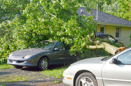 This tree fell at a home on Taylor Avenue, damaging two vehicles.
