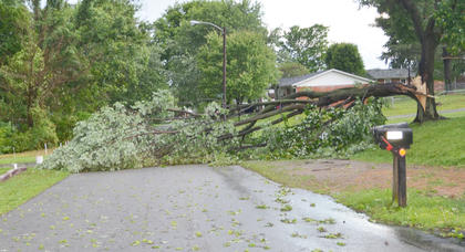 This tree on Candace Street blocked a portion of the roadway on Thursday morning.