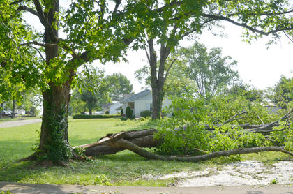 This large tree fell on Jackson Street early Thursday morning.