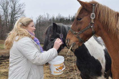 Deb Straley gives her Tennessee Walking Horses Baby Diamond, left, and Stuffy, right, treats at Straley Farm on Old Lebanon Road.