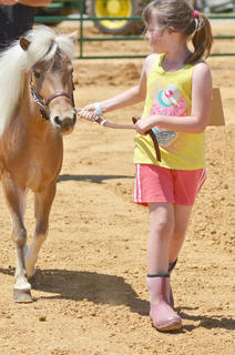 Samantha Akridge of Campbellsville leads her horse Cheyenne as she participates in the youth horse show at the fair on Saturday.