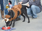 SLIDESHOW: Pets on Parade