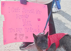 "<div class=""source"">Calen McKinney</div><div class=""image-desc"">This dog participates in Saturday's protest.</div><div class=""buy-pic""><a href=""http://web2.lcni5.com/cgi-bin/c2newbuyphoto.cgi?pub=085&orig=Shelter%2BProtest%2B%25232%2B19.jpg"" target=""_new"">Buy this photo</a></div>"