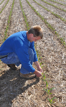 "<div class=""source"">Leslie Moore</div><div class=""image-desc"">Tyler Reynolds searches for slugs that can be detrimental to cornfields when the temperature drops and the ground stays wet.</div><div class=""buy-pic""><a href=""/photo_select/44423"">Buy this photo</a></div>"