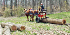 "<div class=""source"">Photo/SUBMITTED</div><div class=""image-desc"">Kay Gschwind, of Taylor County, and his Suffolk Punch Draft Horses will be demonstrating how logging was accomplished prior to tractors and log skidders</div><div class=""buy-pic""><a href=""/photo_select/67586"">Buy this photo</a></div>"