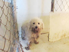 """<div class=""""source"""">Submitted</div><div class=""""image-desc"""">Pictured is one of the dogs that was found at the Phillips property earlier this year.</div><div class=""""buy-pic""""><a href=""""/photo_select/67577"""">Buy this photo</a></div>"""