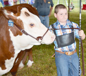 Taylor County youth and adults alike competed Saturday in the annual Taylor County Fair open beef show. Above, Ryan Underwood walks with his beef cow during the competition.