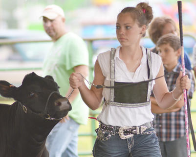 Shelby Johnson of Taylor County walks with her beef cow during the competition.