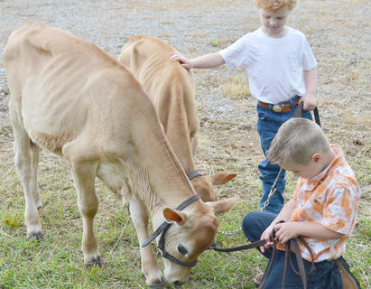 Jace Briggs, at left, and Ben Carrender, both of Campbellsville, check out their cattle before competing.