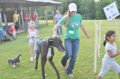 "Jolene Wuertenberg shows off her dogs at the fair's first dog show, sponsored by the Taylor County SPCA. Claudia Garner, at right, holds a sign introducing the dogs as ""Mr. Tall and Mr. Small."" At left, Gwennie Gadberry walks Scuffy and Wuertenberg holds her Great Dane, Knightly."