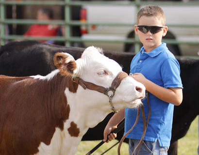 Wesley Burton of Campbellsville participates in the Open Beef Show on Saturday at the Taylor County Fair.