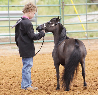 Tyler Thomas shows Night Deposit on Saturday during the Taylor County Fair.