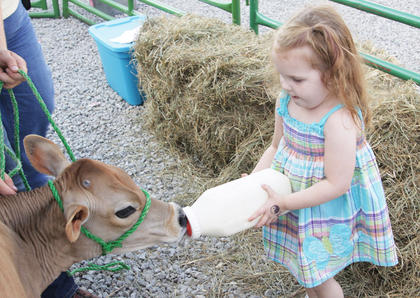 Kennadie Cornette, 3, feeds a calf at the 4-H petting zoo at the Taylor County Fair.