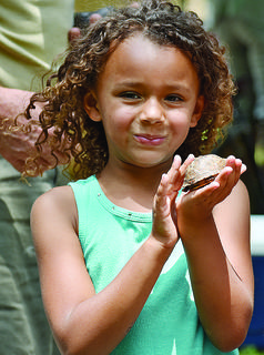 Gabby Clements, 6, pets a turtle hiding in its shell.