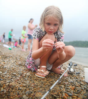 Alinna Bray, 6, of Campbellsville, concentrates while she puts a worm on her hook during Saturday's Kids Fishing Derby at Green River Lake State Park.