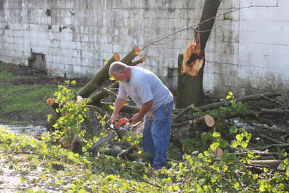 Campbellsville Water & Sewer Co. employee Ronnie Murray uses a chainsaw to cut this Bradford pear tree on Martin Luther King Boulevard that was destroyed during Thursday morning's storm.