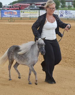 Cozetta Legg of Gradyville trots with her miniature horse in this year's show at the fair.