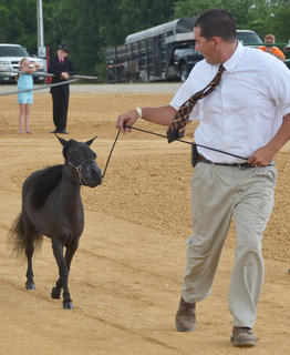 Matt Porter of Campbellsville participates in the fair's miniature horse show.
