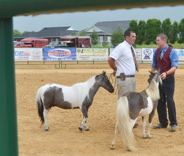 Matt Porter, at left, and David Chappell, both of Campbellsville, compete in the fair's miniature horse show.