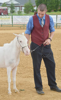David Chappel of Campbellsville participates in the fair's miniature horse show.