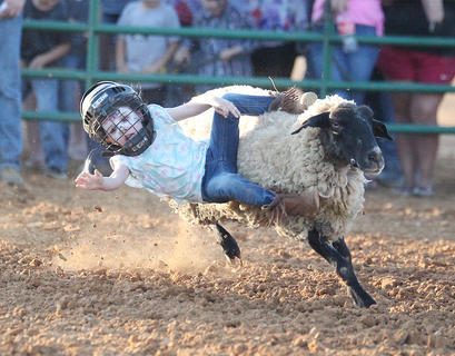 Kylie Murton, 3, tries her hand at Mutton Bustin at the Taylor County Fair.