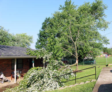 This tree on Peterson Street was split in half during Thursday morning's storm.