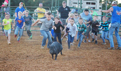 Children take part in the annual pig-catching contest at the Taylor County Fair Tuesday  night. It was one of the many events that take place as part of the annual Family Night at the fair.