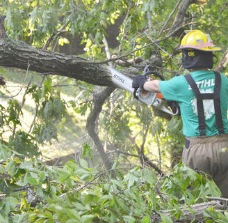 Campbellsville Fire & Rescue firefighter Alex Quinn cuts a tree limb. Fire & Rescue personnel spent several hours Thursday morning working to remove several trees that blocked the entrance to the Forest Hills Subdivision.