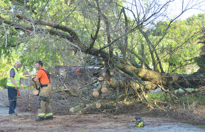 This tree blocked a portion of Risen Avenue on Thursday morning.