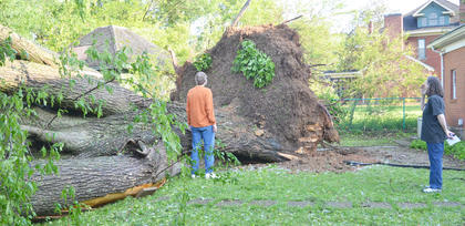 Jim and Nevalyn Moore look at a tree in their backyard that fell during Thursday's storm. They said they have been told the elm tree was the oldest tree in Taylor County.