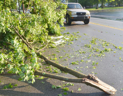 Several trees and lots of other debris fell during Thursday's storm, like this damage on Lebanon Avenue.
