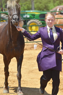 Mikaela Shoopman of Campbellsville leads her horse Dutchess as she participates in the youth horse show at the fair on Saturday.